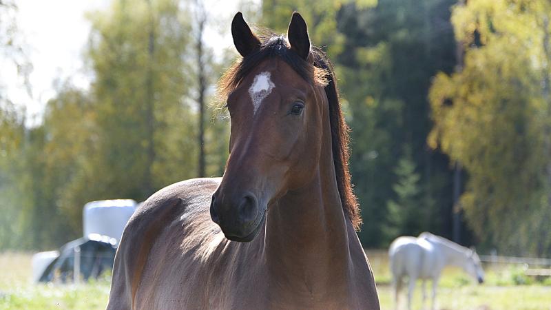 Matkalla hevosharrastajasta täysin intohimoiseksi hevosenomistajaksi? Muutama vinkki