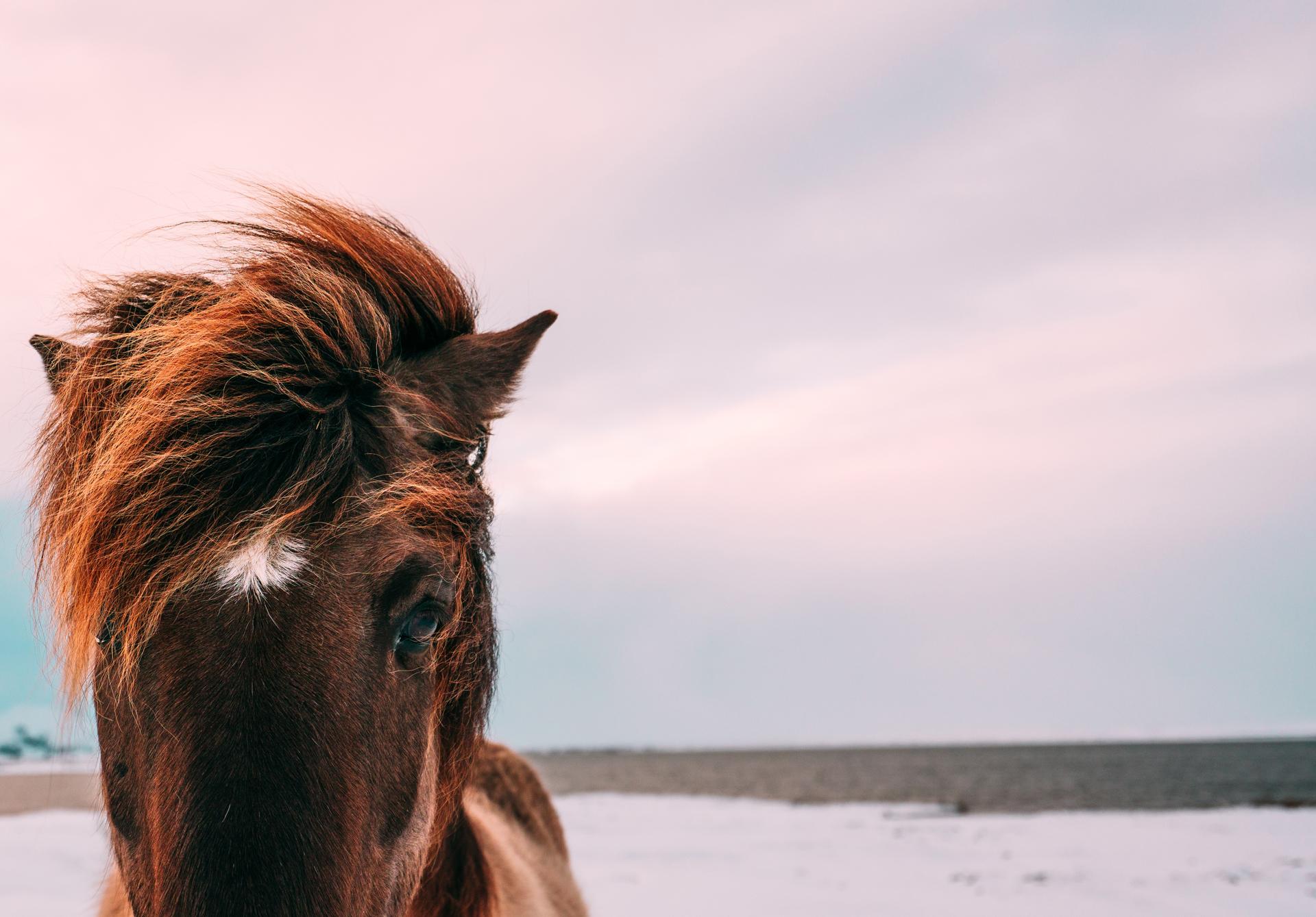 Hevostalouden taantumasta voi hyötyä – tässä muutama vinkki juuri sinulle!