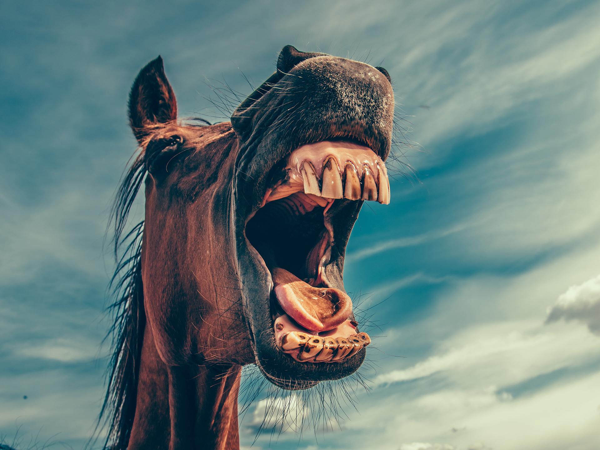 Huijaavatko hevoskauppiaat? Hehkuttavatko hevosenomistajat omiaan liikaa?