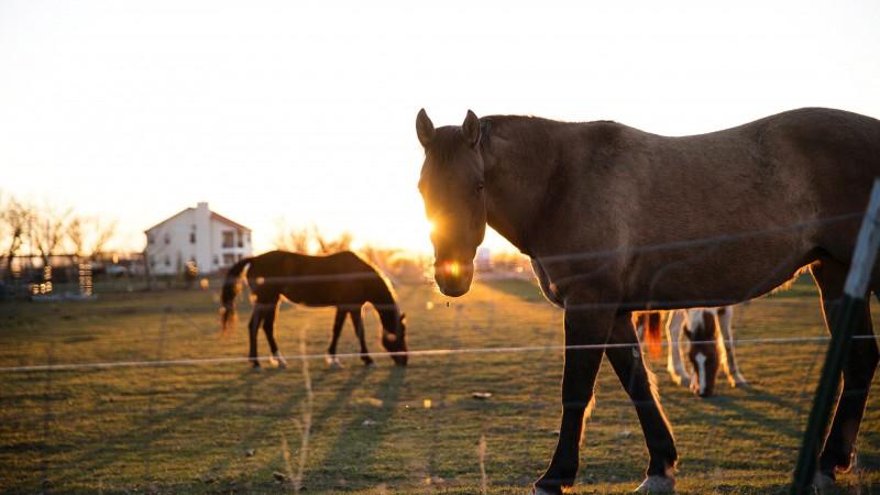 Nuori hevonen ja ensimmäinen valmennusklinikka-mitä sitten tapahtui?