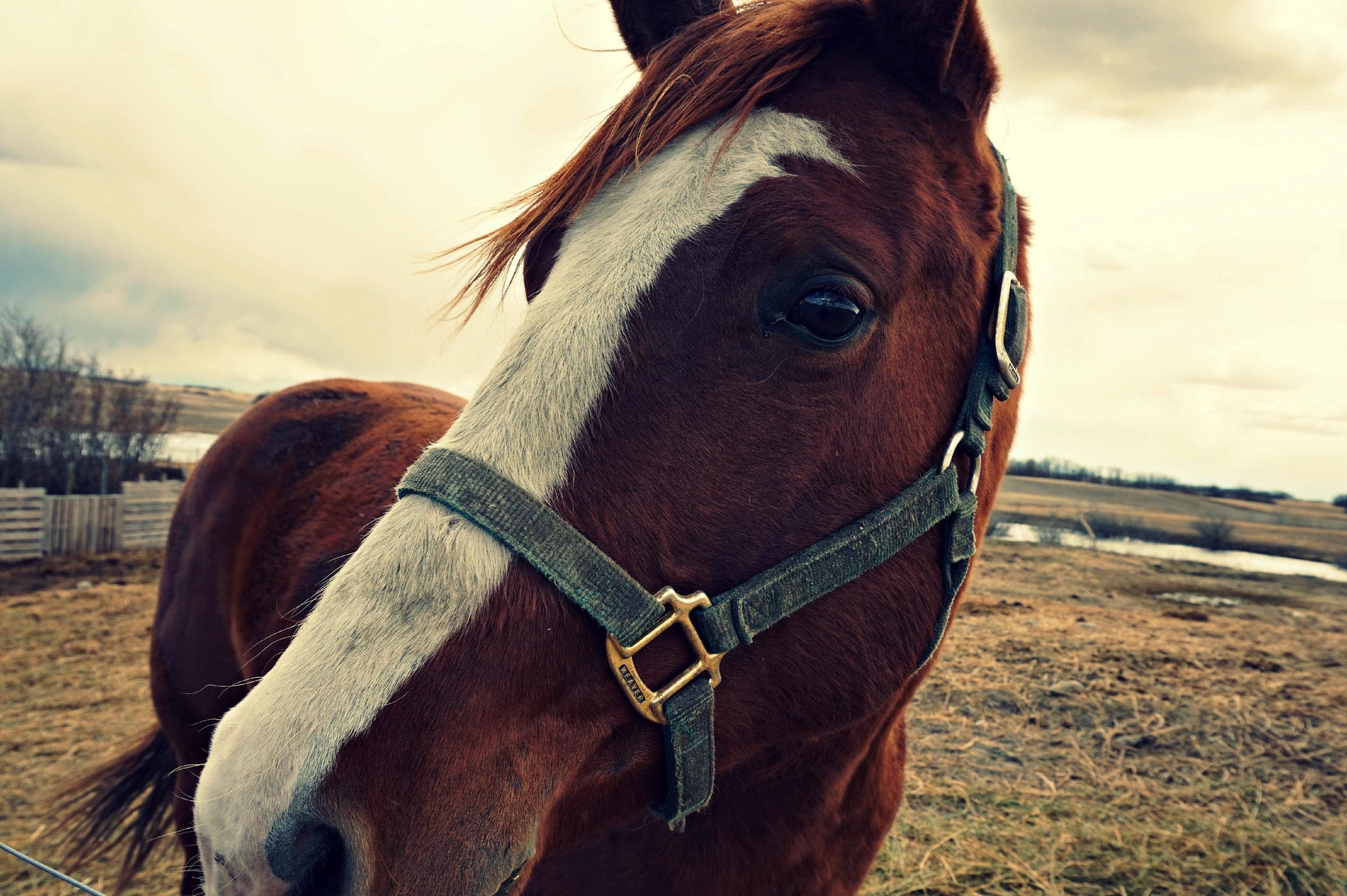Onko hevosesi oikessa mielentilassa koulutusta varten?